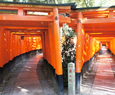 fushimiinari shrine sightseeing kyoto